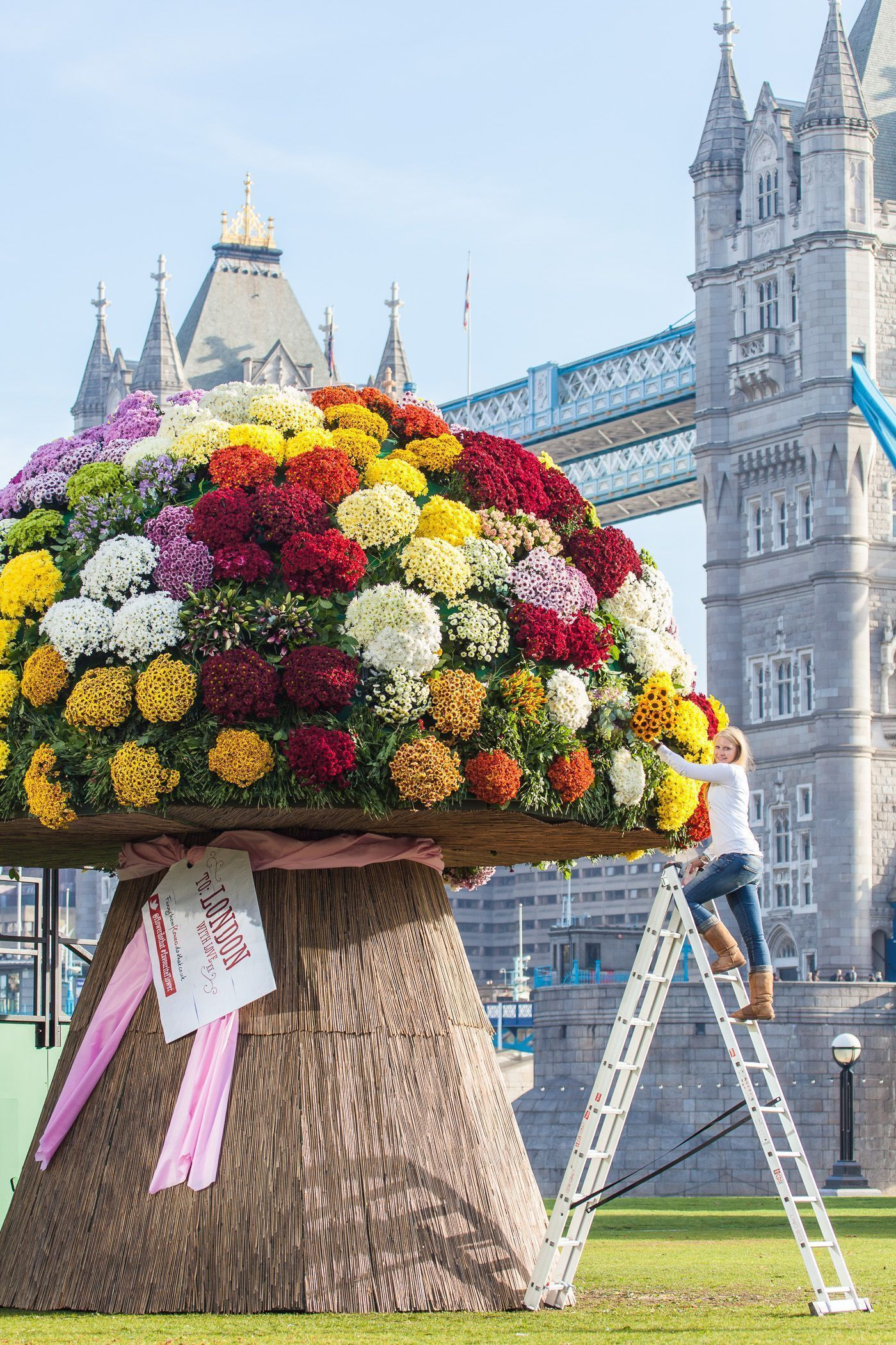 Pr photos of the week oct 11 2012 flowers dhlflorist Images